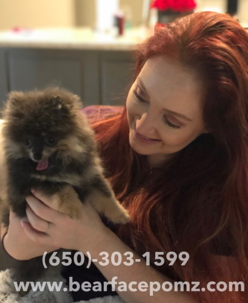 Pomeranian Puppies For Sale 650-303-1599