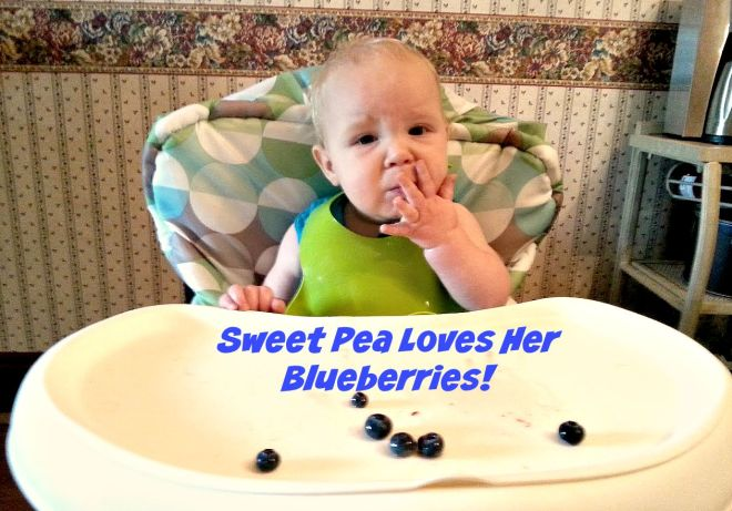 blueberrybaby1