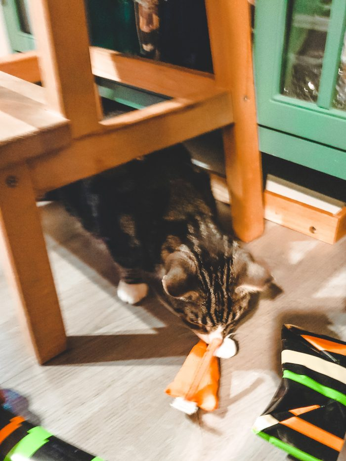 Who would have thought that getting a cat would actually help me with my OCD? Well, this is the story how our cat Lawrence has helped me deal with my OCD and other issues as well!