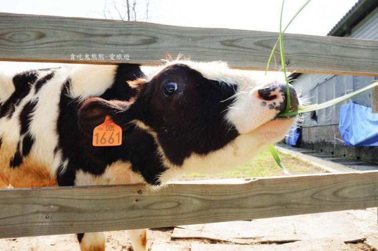 雲林旅遊 雲林免費入園牧場-千巧谷牛樂園牧場-餵牛餵魚餵鴨-有的吃有的玩超適合親子旅遊