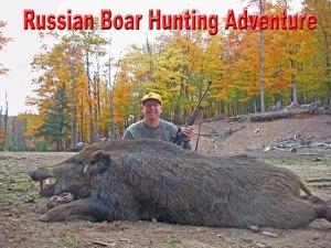 Boar Hunts