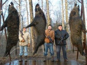 boar hunting