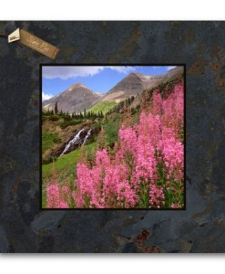 12x12 Slate Pic R94SP-Fireweed_Yankee Boy Basin_CO