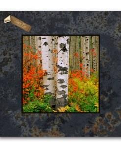 12x12 Slate Pic X05SP-Red Bush & Aspen_McClure Pass_CO