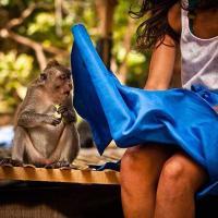 nasty-monkey