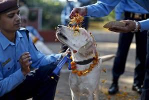 Kukur Tihar - thanking dogs festival (Nepal)