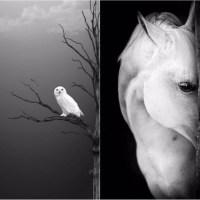 Beauty Soul - Wild Life
