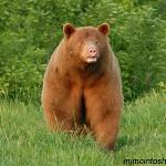 bear brown guy June 2007