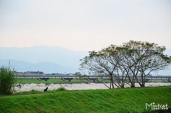 靜園民宿 (67)