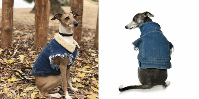 PETHAUS - SHERPA LINED DENIM DOG VEST with Italian greyhound