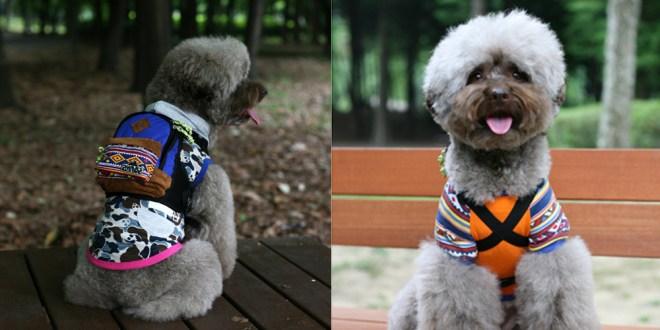 Charlie's Bag - Blue - 愛犬用リュック
