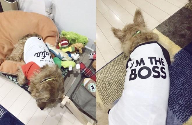 Customer's woof #29 たんたんズ - Zee.dog & Dog Threads