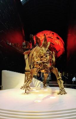 World's Most Complete Stegosaurus