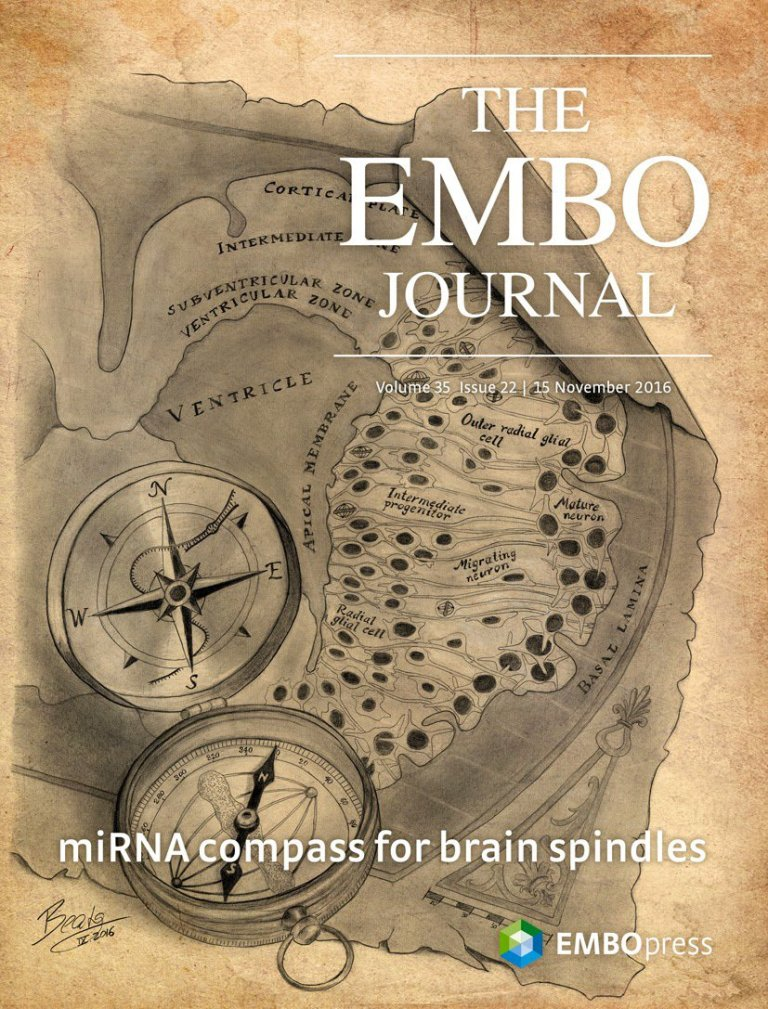 EMBO Journal Cover – A Molecular Compass for Cell Division