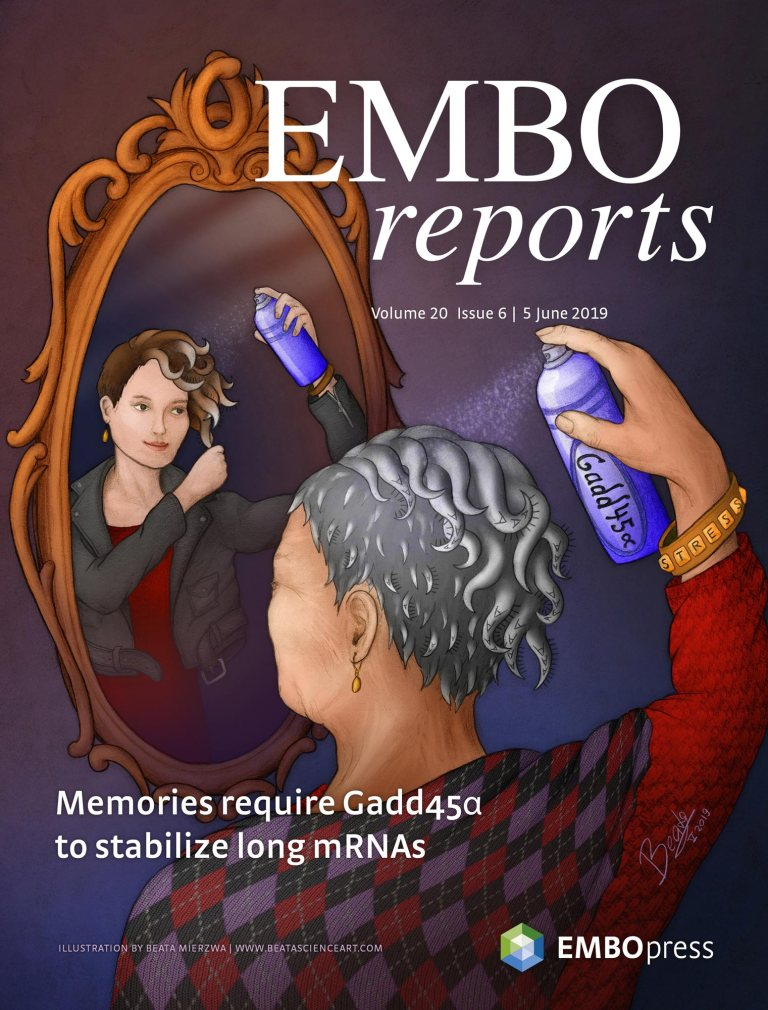 EMBO Reports cover – stabilizing mRNA strands for memory formation!