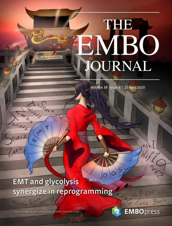 EMBOJ Cover - Dancing Towards Pluripotency