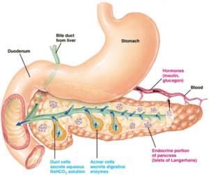 acute-chronic-pancreatitis