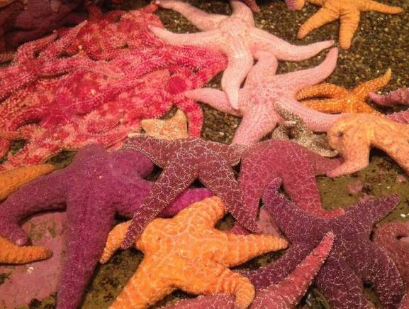 sea-stars.jpg.0x545_q70_crop-scale