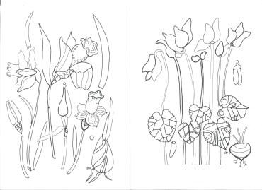 colouringflowers-1