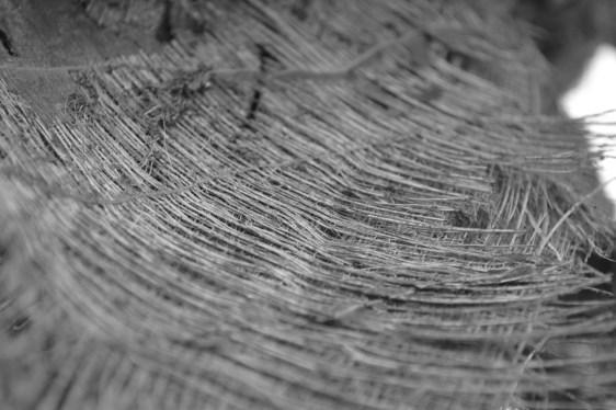 palm tree leaf fiber