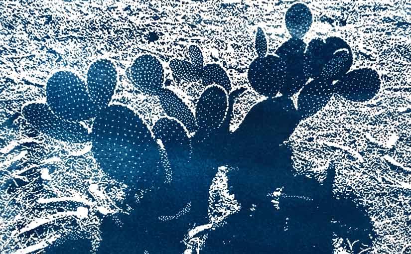 cyanotype of cactus, detail