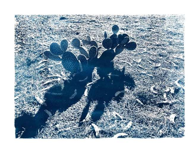 blue cyanotype image of cactus