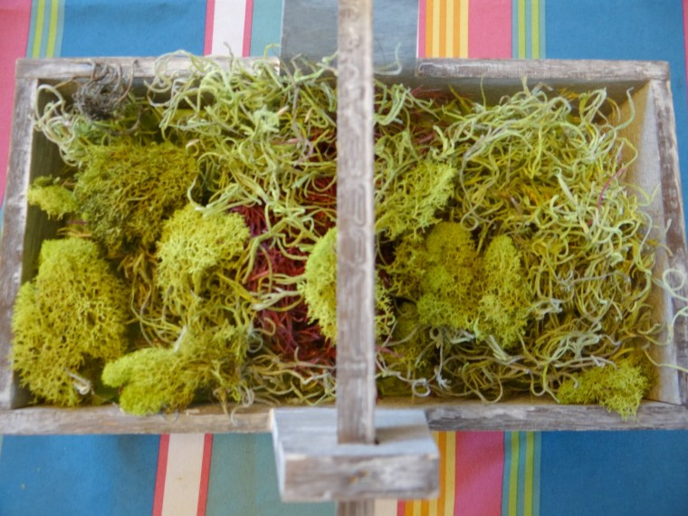 Moss Step