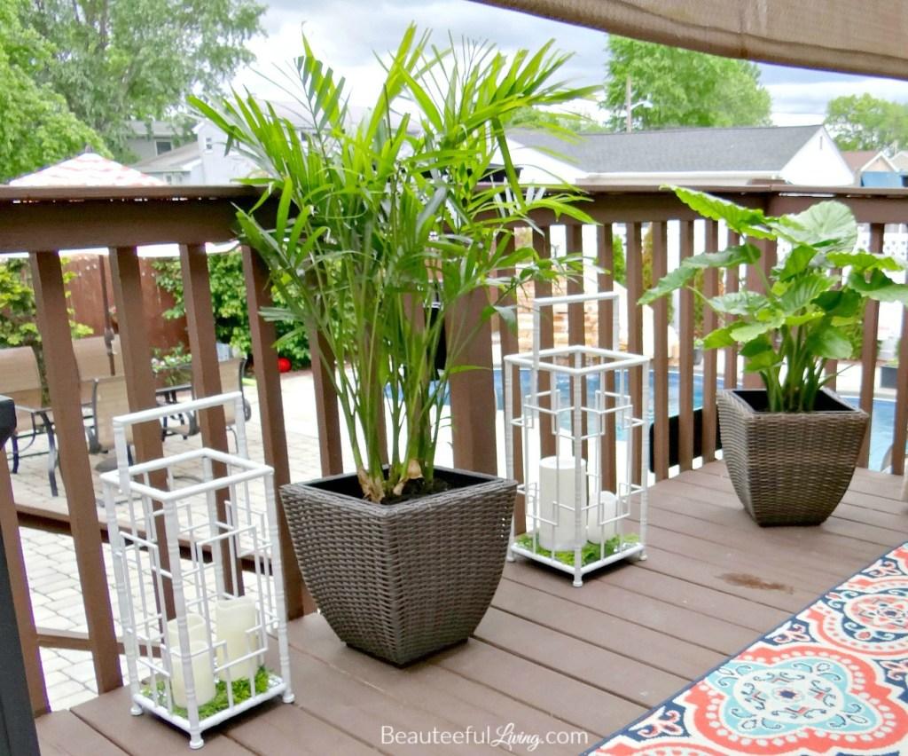 Tropical Plants - Beauteeful Living