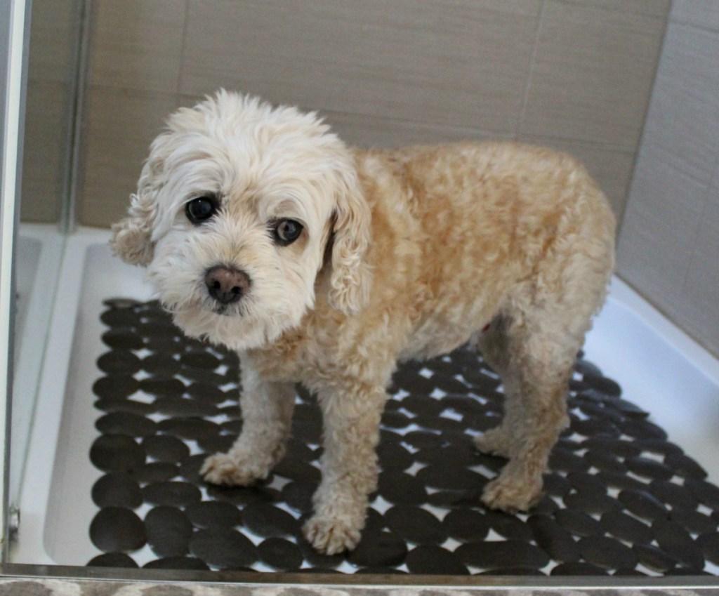Roxie in shower