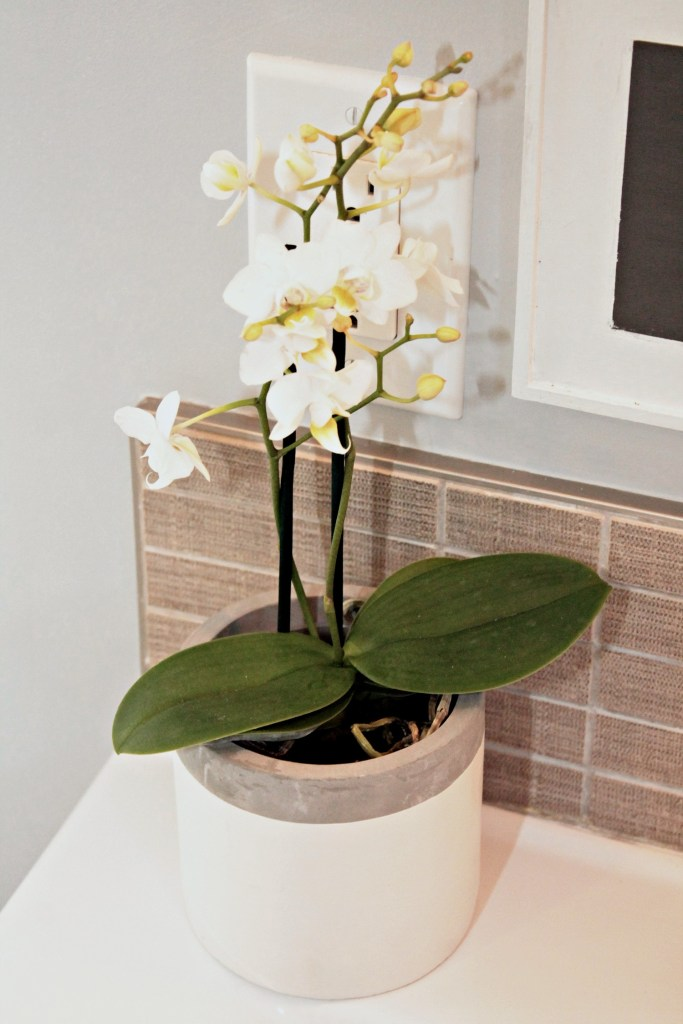 White Orchid - Beauteeful Living