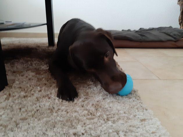 Caro's Hundesalon in Wangen bei Olten, Toppl