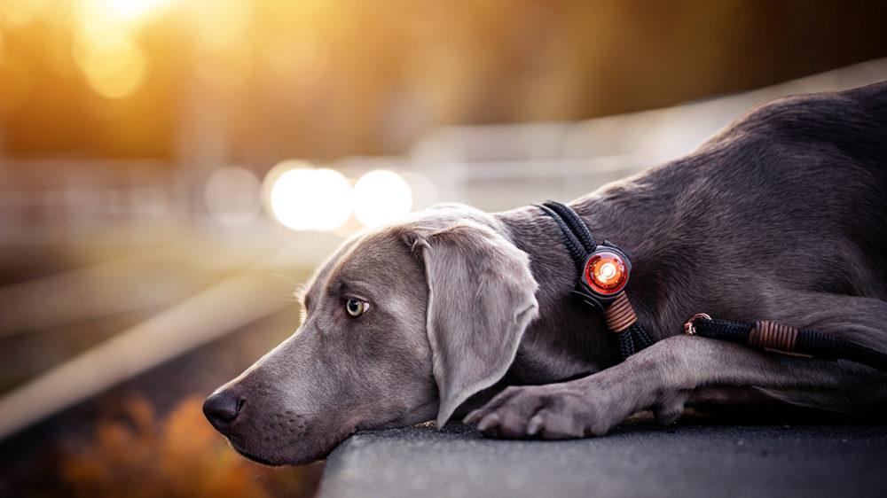 Caros Hundesalon - Orbiloc