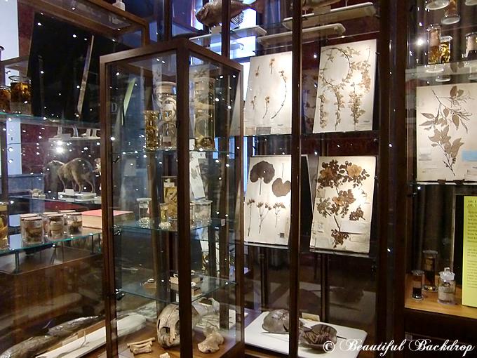 siebold_museum02