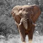 「象がいる」!?日本語と似ているので勘違いして困るドイツ語単語
