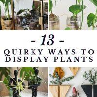 DIY: 13 Creative Indoor Plant Decoration Ideas (With Free Video Tutorial!)