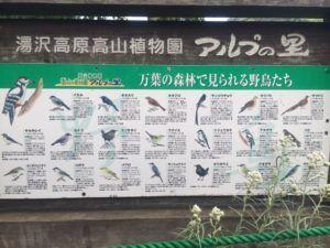 IMG 6656 300x225 - 湯沢高原 夏季シーズン