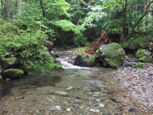 image 61 300x225 - 埼玉県飯能市の名栗川渓流釣り情報