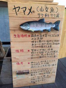 image 6 e1475992435607 225x300 - 秩父の中津川で渓流釣り
