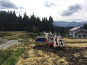 img 4717 300x225 - 新潟県湯沢町で稲刈りに挑戦