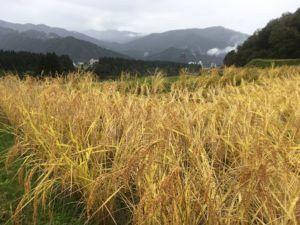 img 4730 300x225 - [:ja]雨の日の農作業は?[:en]雨の日の農業は[:]