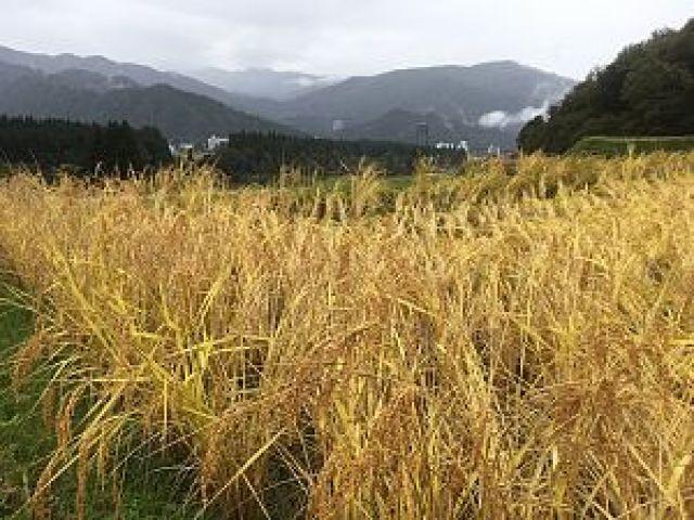 img 4730 - [:ja]雨の日の農作業は?[:en]雨の日の農業は[:]
