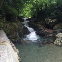 名栗川渓流釣り情報