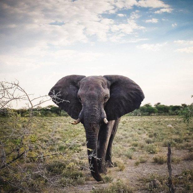 moniquedecaro_namibia-3605