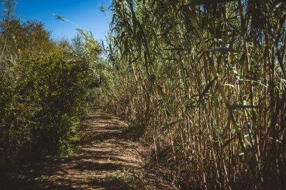 moniquedecaro-south-africa-0008-rosendal