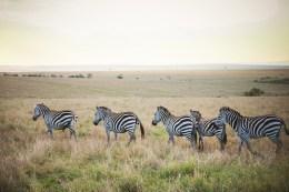 moniquedecaro-mara-bush-camp-kenia-3789