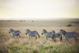 moniquedecaro-mara-bush-camp-kenia-3789