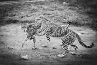 moniquedecaro-mara-bush-camp-kenia-3891