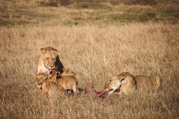 moniquedecaro-mara-bush-camp-kenia-4609