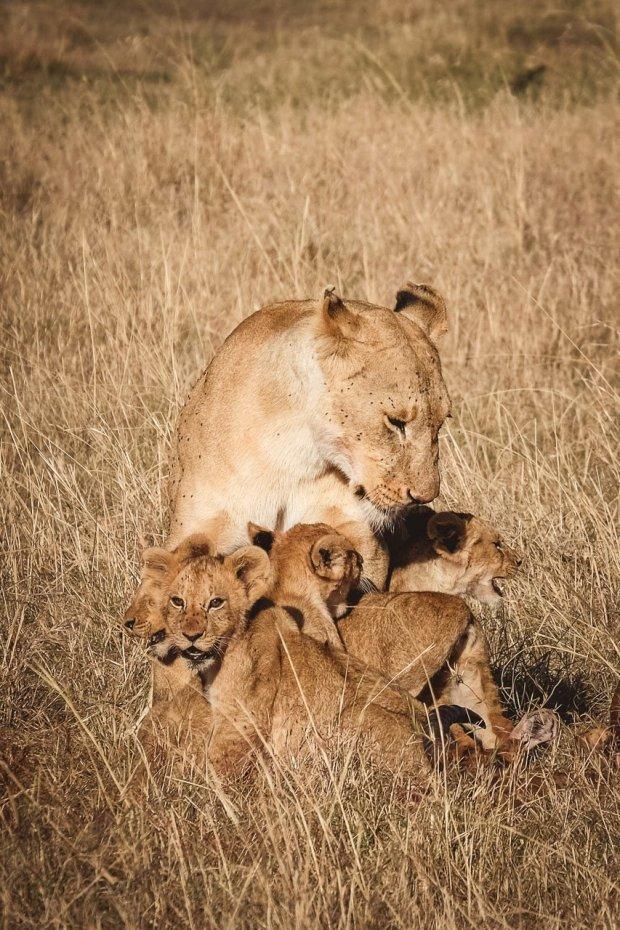 moniquedecaro-mara-bush-camp-kenia-4611