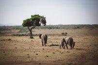 moniquedecaro-mara-bush-camp-kenia-4835
